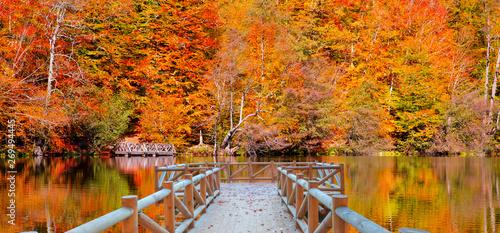 Fotografie, Obraz  Autumn landscape in (seven lakes) Yedigoller Park Bolu, Turkey