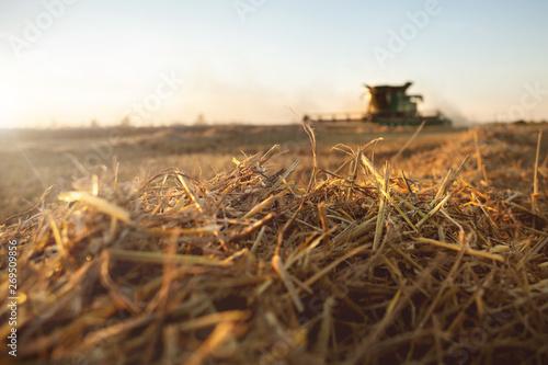 Fototapeta Stroh und Mähdrescher auf einem Weizenfeld