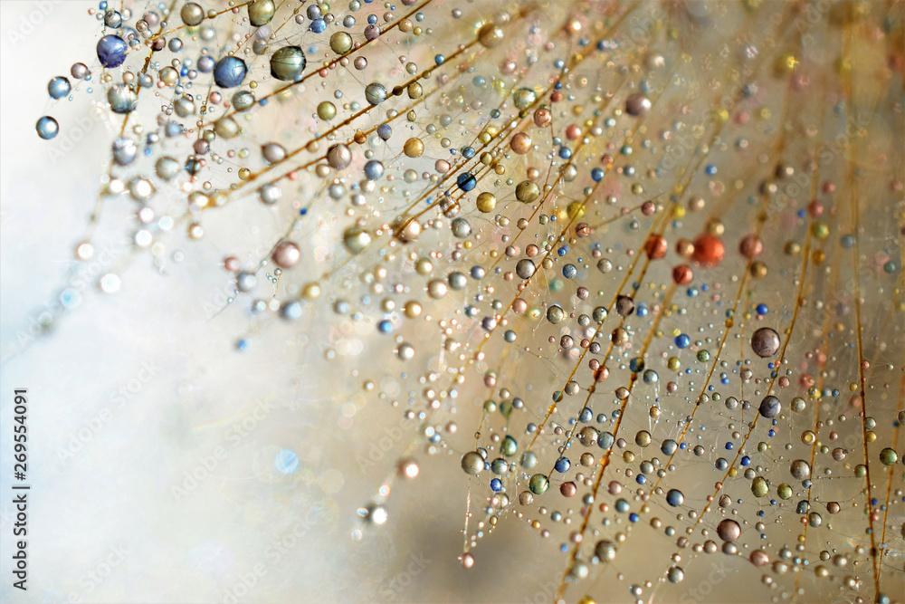 Fototapety, obrazy: droplets