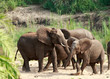 elephants family playing in the sand