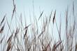 canvas print picture - Silhouette von wilden Gräsern wie gemalt im Gegenlicht der Sonne als Close up