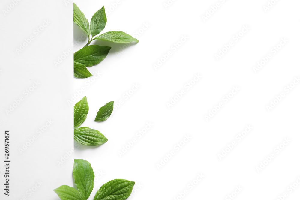 Fototapety, obrazy: Blank card and spring green leaves on white background, top view. Space for text