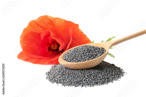 Composition with poppy seeds and flower on white background - 269572429