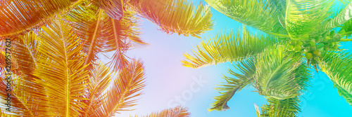 Poster Palmier Colorful sky and palm trees view from below, panoramic vintage summer background