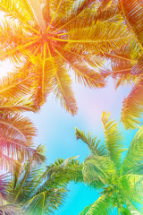 FototapetaColorful sky and palm trees view from below, vintage summer background