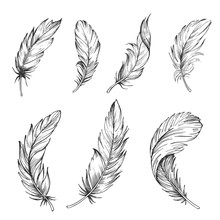 Set Of Bird Feathers. Hand Dra...