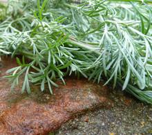Wormwood, Absinthium (Artemisi...