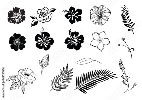 Photo Flowers hibiscus, plumeria, rose, anemone silhouette black and white, isolated