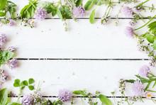 Wildkräuter Kräuter Essbare Blüten Hintergrund