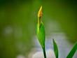 Leinwandbild Motiv Reeds in Flower