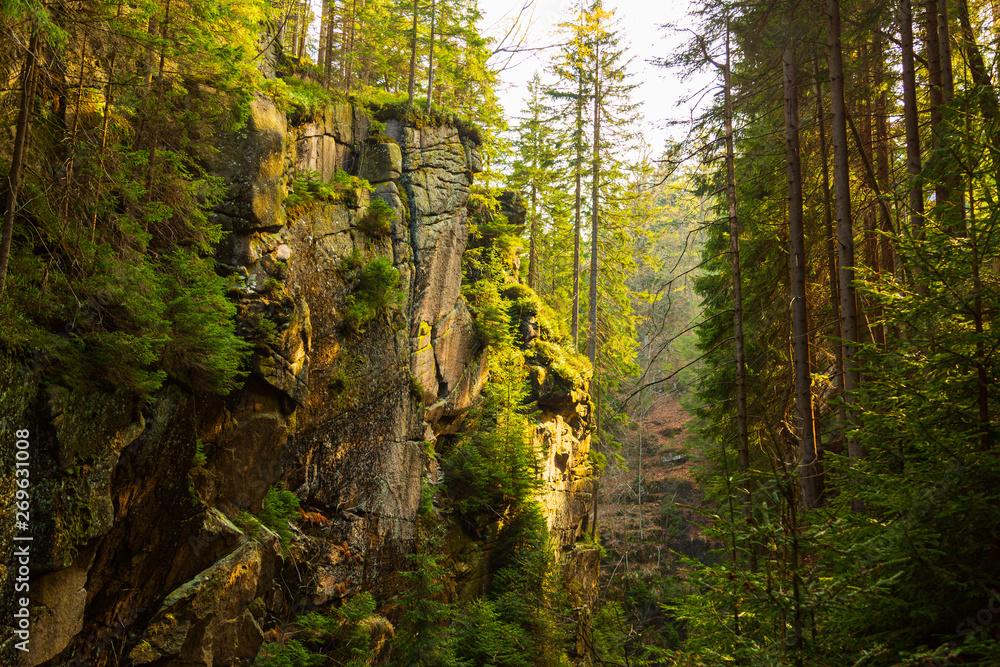 Fototapety, obrazy: Kamienczyk mountain ravine in pine european forest