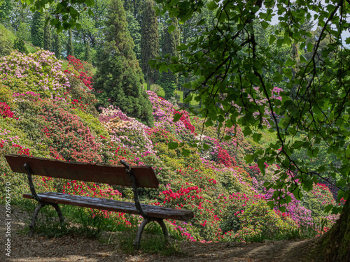 Fototapety, obrazy: Burcina Park, Biella - Italy. bench overlooking the rhododendron bloom