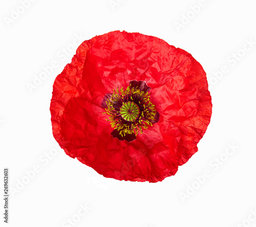 Photo Bright red poppy flower isolated on white, top view