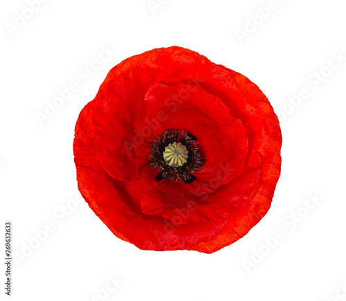 Bright red poppy flower isolated on white, top view