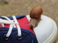 Snail Crawling On A Running Shoe In The Park