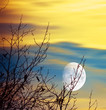 canvas print picture - Moon tree natural scenery, Picture of big dry tree in moonlight, Bright moon in sky, Wintertime nature, Dramatic sunset, Beautiful landscape