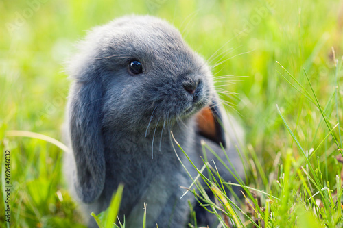 Little cute rabbit (bunny) sitting in the grass Canvas Print