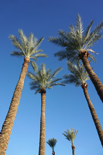 Low Angle View Of Tropical Palm Trees And Blue Sky