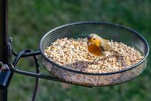 Robinon Bird Feeder