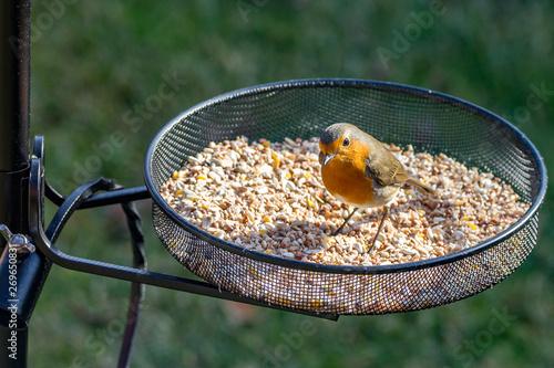 Valokuva robinon bird feeder