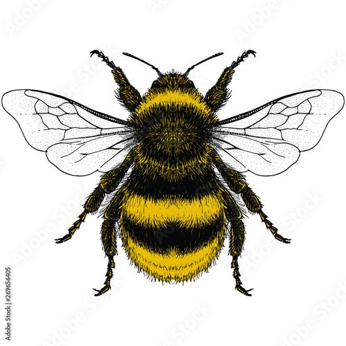 Canvas Print Bumblebee Illustration