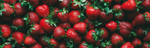 Strawberry Food Background. Ripe Organic Farm Berry
