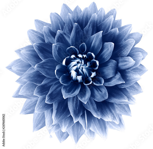 Papiers peints Dahlia blue flower dahlia on a white background isolated with clipping path. Closeup. big flower for design. Dahlia.