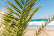 Palm tree and beautiful beach and sea on the background. Summer concept