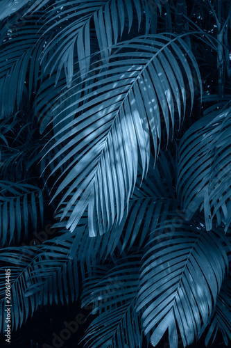 Leaves abstract palm tropical leaves colorful flower on dark tropical foliage nature background dark blue foliage nature Wall mural