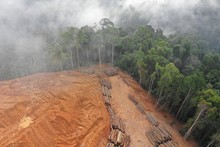 Logging. Aerial Drone View Of ...