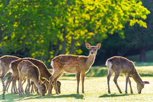 Keuken foto achterwand Hert 奈良公園の鹿