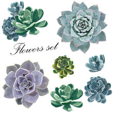 Beautiful Flowers Set. Echeveria Flowers Flat Lay, Top View. Vector Illustration