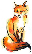 Watercolor Red Fox Isolated On...