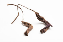 A Close-up Look At The Form, Shape And Texture Of Two Dried Brown Leaves Set Artistically As Fine Art Composed Image On A Plain White Background.