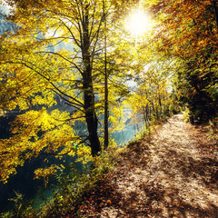 Obraz na Szkle Las Autumn forest scenery with rays of warm light illumining the gold foliage and a footpath leading into the scene. Austrian alps in Autumn. Forest near Gosausee lake. popular hiking location