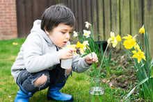 Cute Boy Using Sprayer Bottle Sprinkles Water On Daffodils Flowers, Kid Having Fun With Gardening, Active Child Activities In Garden, A Boy Spraying Flowers In The Vase, Children Gardening Concept