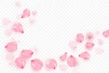 Pink Sakura Falling Petals Vector Background