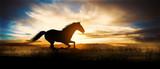Free horse run at sunset