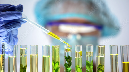 Biochemist dripping yellow substance into test tube with green plant, extraction Wallpaper Mural