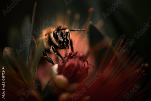 Photo sur Toile Bee macro bee on red flower