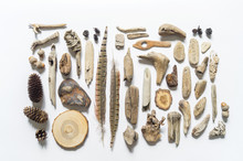 Seashells And Sticks,bump And Feather Corals Collection Flat Lay Still Life Are Natural Material. Brown Natural Color.