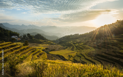 beautiful landscape of  rice terraces in China Wallpaper Mural