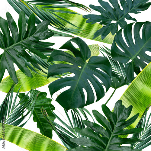 Obraz Tropical background with monstera and banana leaves.  Natural green fresh flat lay background. - fototapety do salonu