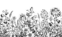 Wild Plants And Flowers Seamless Border