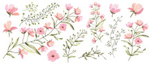 Watercolor Illustration. Botanical Collection Of Wild And Garden Plants. Set: Leaves Flowers, Branches, Herbs And Other Natural Elements. All Drawings Isolated On White Background. Pink Flowers.