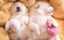 Two Little Cute Dog Puppies