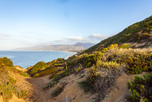 Cliffedge Sandy Path Lined With Wild Plants, Western Wallflower Iceplant, With Ocean Shoreline View