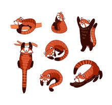 Red Panda Vector Illustration....