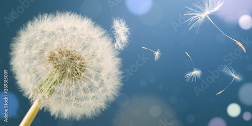 Poster de jardin Pissenlit Dandelion releasing seeds. Abstract work. Panoramic.