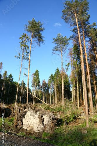 Fototapeta Sturmschaden im Wald obraz na płótnie